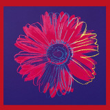 Andy Warhol - Daisy, c.1982 (Blue and Red) - Poster