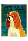 Cavalier King Charles (blenheim) Posters by John Golden
