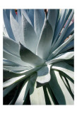 Cactus I Posters par Jenny Kraft
