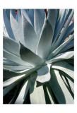 Cactus I Posters by Jenny Kraft