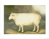 Sheep III Print