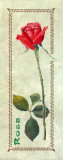 Rosa Woodwork Print by L. Tyndall