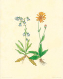 Flore Alpine V Prints by  Vannter & Kunstv