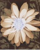 Velvet Daisy I Art by Matina Theodosiou