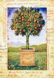 Fruti Mediterranei I Posters by Gina De Francesco