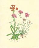 Flore Alpine I Prints by  Vannter & Kunstv