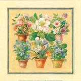 Flower IV Poster