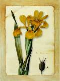 Iris Posters by Cesano Boscone