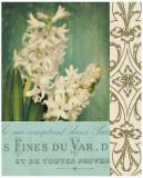Floral Souvenir II Prints by Cristin Atria