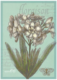 Floraison Nouveau I Poster by Devon Ross