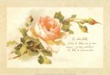 Ma Chère Colette Print by C. Klein