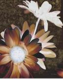 Velvet Daisy II Posters by Matina Theodosiou