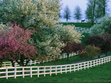 Flowering Crab Apple Trees Bloom on Manchester Farm's Grounds Photographic Print by Melissa Farlow