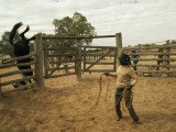 A Horse Tumbles over a Fence While Trying to Elude a Cowboy's Lasso Photographic Print by Joe Scherschel