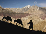 A Ladakhi and Pack Donkeys Pause on a Cliffside on a Himalayan Pass Photographic Print by Thomas J. Abercrombie