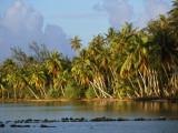 Coconut Palm Trees Line a Lagoon Fotodruck von Priit Vesilind