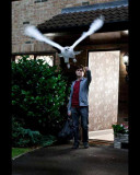 Harry Potter and The Deathly Hallows Part 1 - Harry and Hedwig Photo Photo