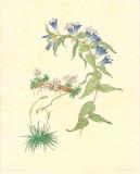 Flore Alpine III Prints by  Vannter & Kunstv