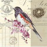 Bird Sketch III Print by Chad Barrett