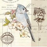 Bird Sketch IV Prints by Chad Barrett