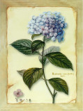 Hortensia Art by Cesano Boscone