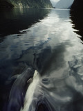 A Pair of Bottlenose Dolphins Ride the Bow Wave of a Research Vessel Photographic Print by David Doubilet
