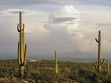 Desert Landscape and Towering Clouds Fotografisk tryk af Walter Meayers Edwards