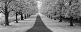 Maple Lined Road Print by Dennis Frates