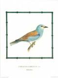 Ornitologica III Prints