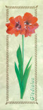 Gladiolus Woodwork Poster by L. Tyndall