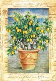 Fruti Mediterranei IV Prints by Gina De Francesco