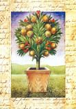 Fruti Mediterranei II Prints by Gina De Francesco