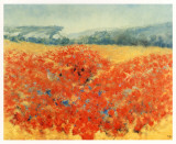 Poppy Field in Provence Prints by  Zarou