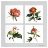 Les Fleurs Roses Prints by Vincent Jeannerot