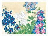 Flower Study II Giclee Print
