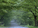 Sugar Maples Shade a Quiet Country Road on the Gonyaw Farm Photographic Print by Michael S. Yamashita