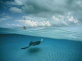 A Stingray and Sailboat in North Sound Fotografisk trykk av David Doubilet