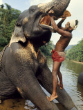 Hanging onto a Short Tusk, a Mahout Brushes His Elephant's Teeth Photographic Print by Gilbert M. Grosvenor