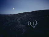 Moonglow Bathes a Caribou Rack and Skull in the Park Photographic Print by Sam Abell