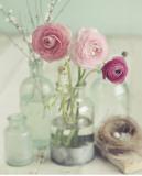 Blooming Bottles Kunstdrucke von Mandy Lynne