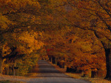 Sugar Maples Shade a Quite Country Road During Autumn Photographic Print by Michael S. Yamashita