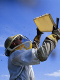A Migratory Beekeeper Holds Up a Frame Full of Honey Photographic Print by Marie Stenzel