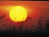Sunset and Tall Grasses Photographic Print by Klaus Nigge