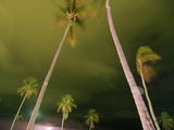 Palm Trees Quiver in a May Storm before Hurricane Season Photographic Print by Maggie Steber
