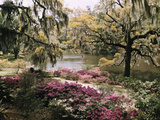 Blooming Shrubs and Trees Near the Waterside Photographic Print by B. Anthony Stewart
