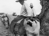 Nicaraguans Braid and Tie Horses' Tails to Keep Them Out of the Mud Photographic Print by Luis Marden