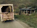 An Elephant Rides to the Next Show in the Back of a Circus Truck Impressão fotográfica por Jonathan Blair