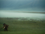 An African Elephant in the Ngorongoro Crater Fotografisk tryk af Chris Johns