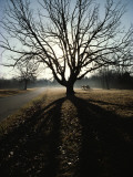A Silhouetted Oak Tree Dwarfs a Cannon Photographic Print by Sam Abell
