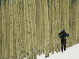 A Man on Skis Touring an Aspen Glade in the Snow Photographic Print by Kate Thompson